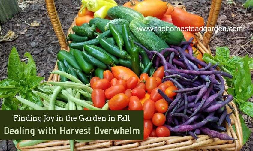 Finding Joy in the Garden in Fall: Dealing with Harvest Overwhelm