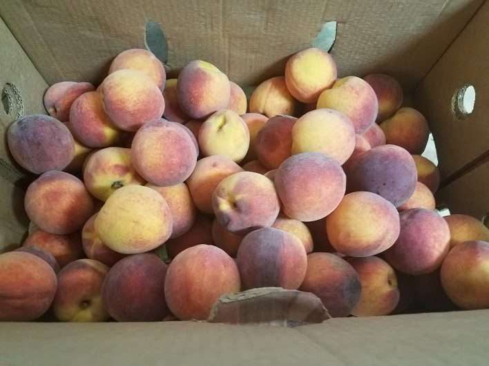 Dealing with Harvest Overwhelm: Peaches