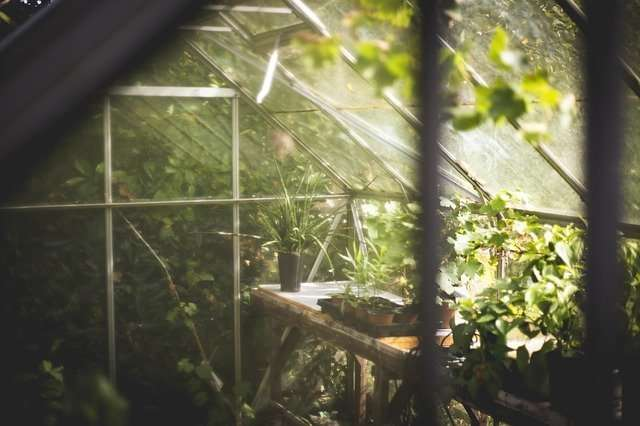 Extend Your Gardening Season with a Greenhouse