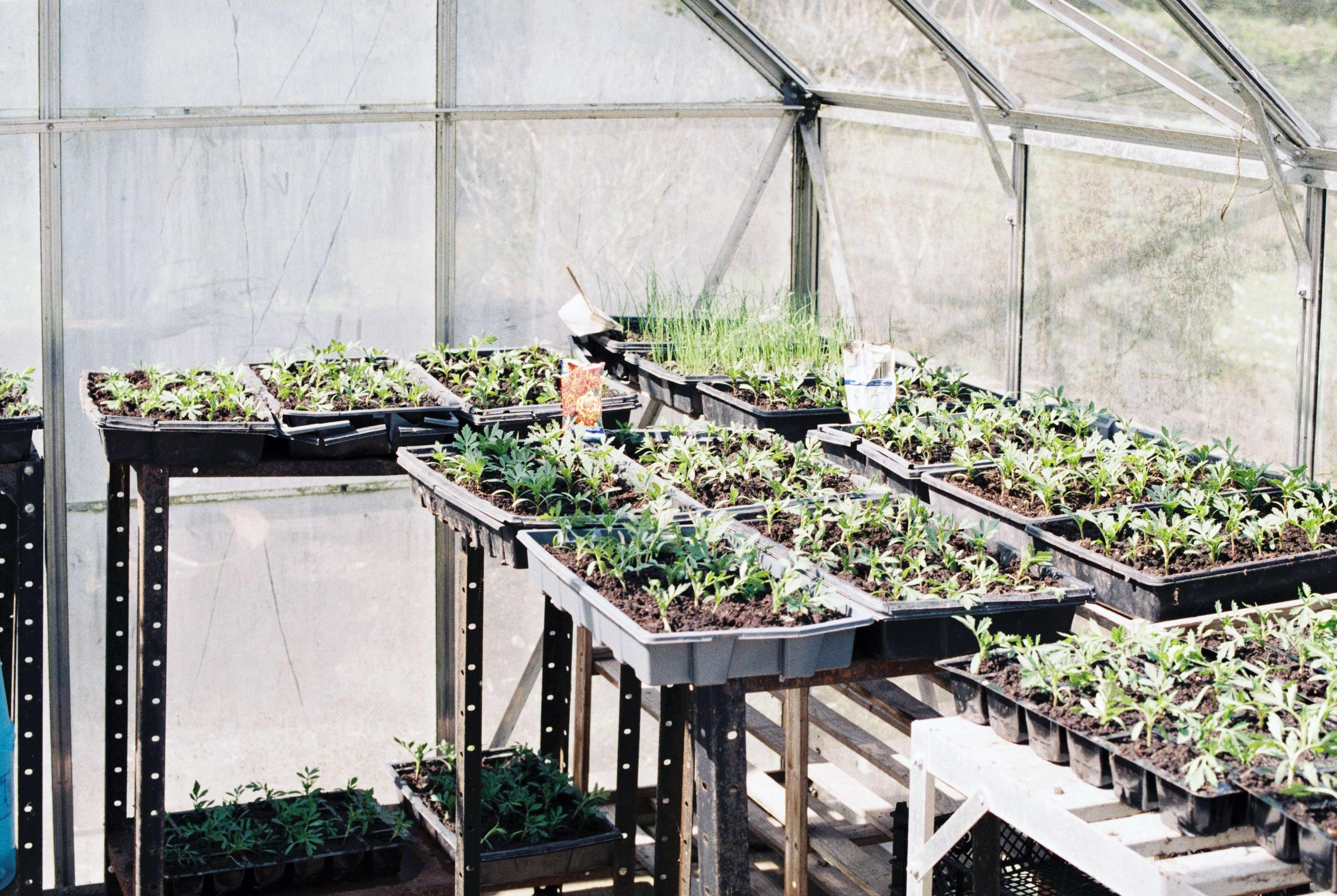 Greenhouse option to extend garden season