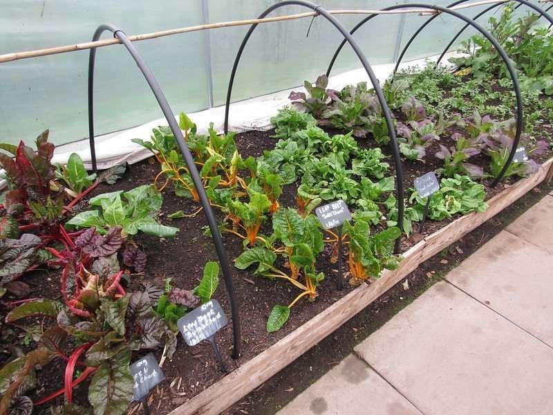 Hoop House to Extend Your Garden Season
