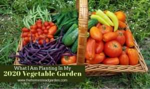 What I Am Growing in My 2020 Vegetable Garden