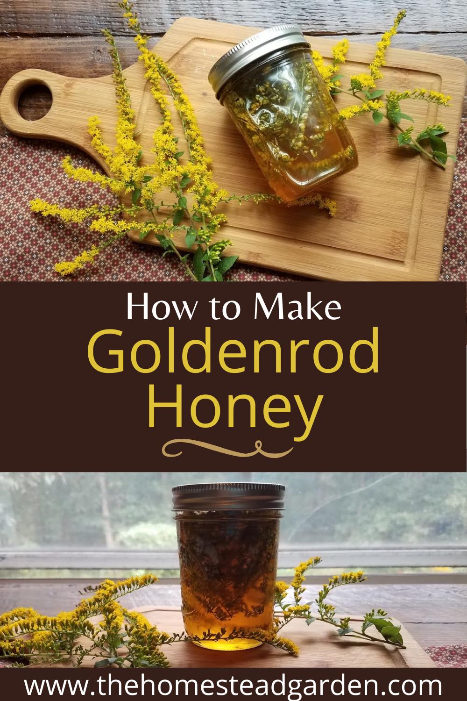 How to Make Goldenrod Honey