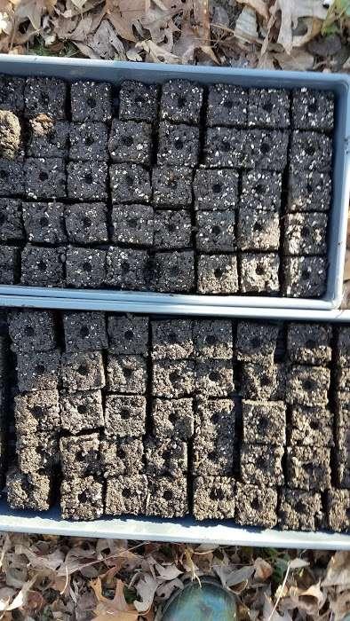 How to Make Seed Starting Blocks